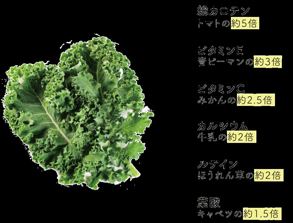ケールの栄養価